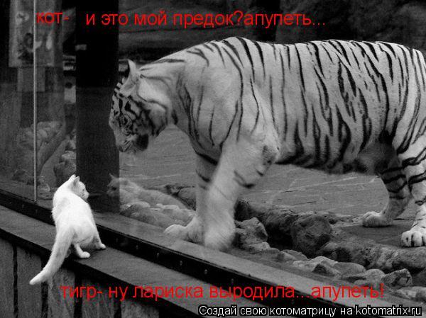 Котоматрица: и это мой предок?апупеть... кот- тигр- ну лариска выродила...апупеть!