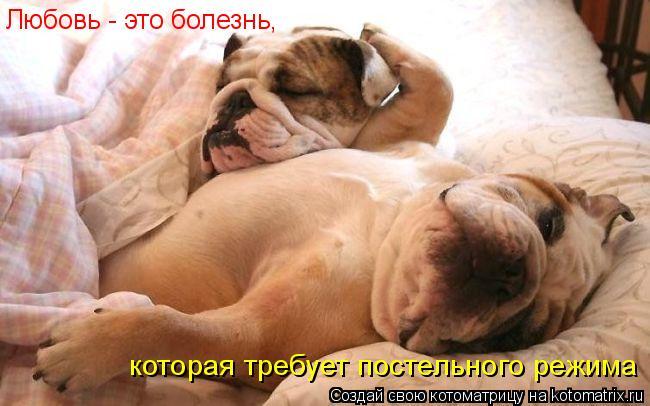 Котоматрица: Любовь - это болезнь,  которая требует постельного режима