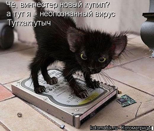 Котоматрица: Чё, винчестер новый купил?  а тут я  - неопознанный вирус Туткактутыч