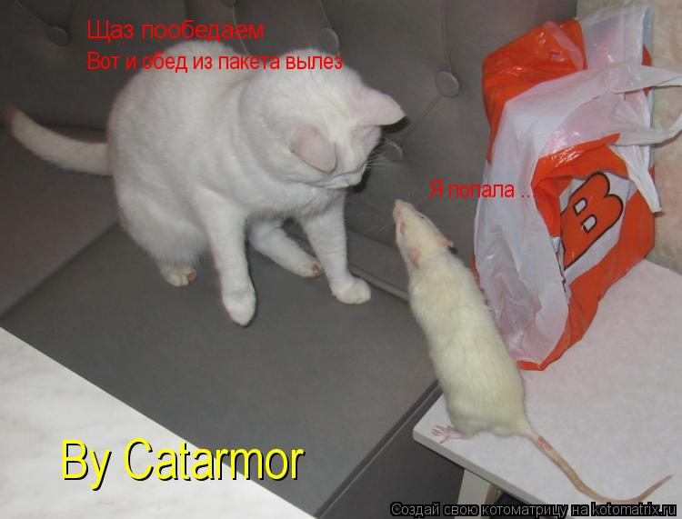 Котоматрица: Щаз пообедаем Вот и обед из пакета вылез Я попала ... By Catarmor