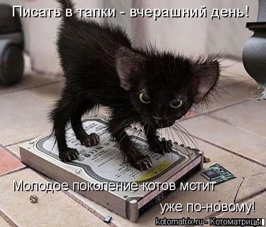 Котоматрица: Молодое поколение котов мстит  Писать в тапки - вчерашний день! уже по-новому!