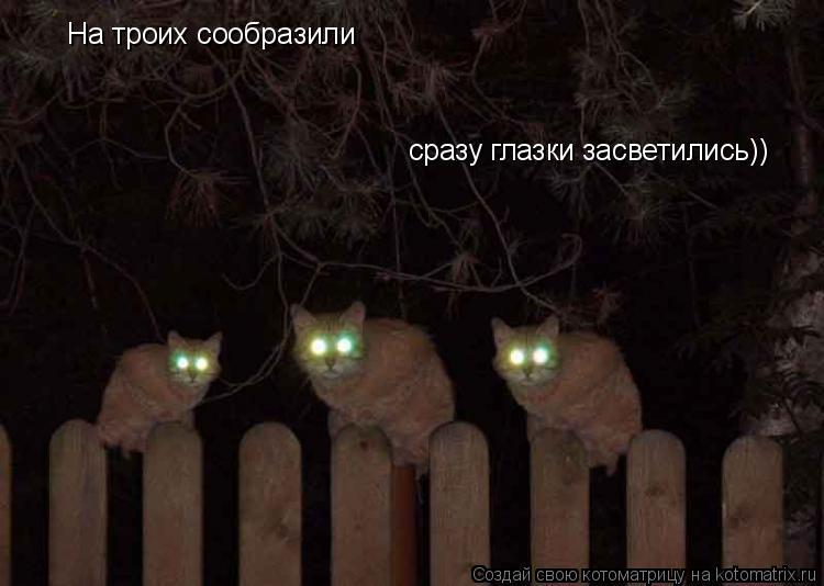 Котоматрица: На троих сообразили сразу глазки засветились))
