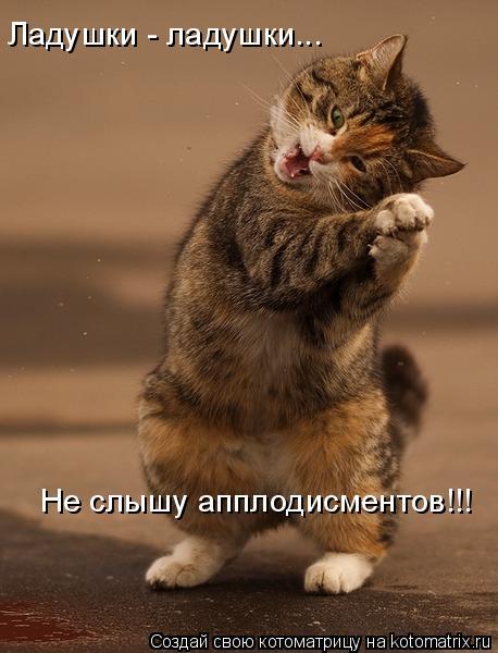 Котоматрица: Ладушки - ладушки... Не слышу апплодисментов!!!