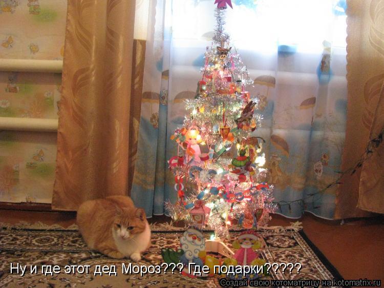 Котоматрица: Ну и где этот дед Мороз??? Где подарки?????