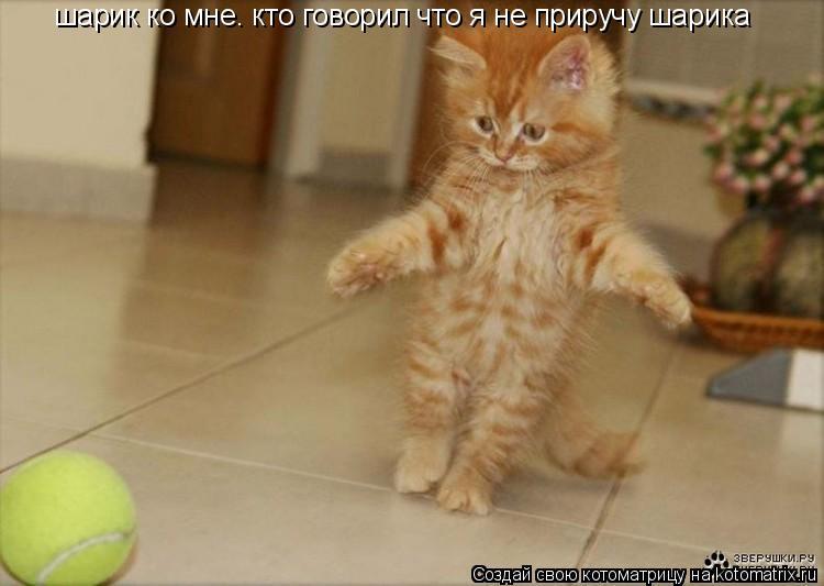 Котоматрица: шарик ко мне. кто говорил что я не приручу шарика