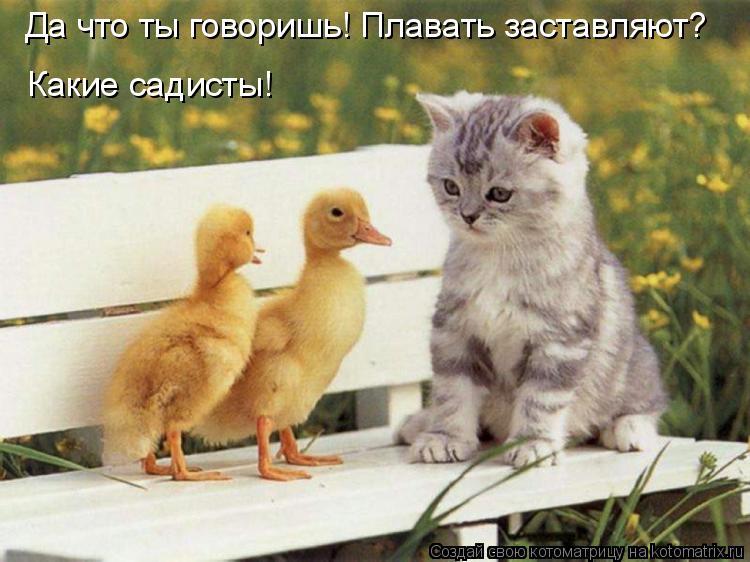 Котоматрица: Да что ты говоришь! Плавать заставляют? Какие садисты!