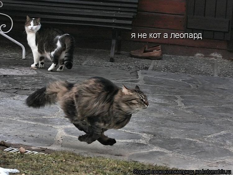 Котоматрица: я не кот а леопард
