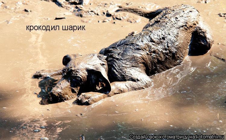Котоматрица: крокодил шарик