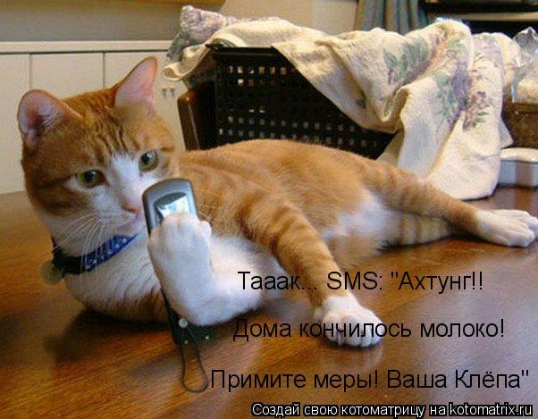 "Котоматрица: Тааак... SMS: ""Ахтунг!! Дома кончилось молоко! Примите меры! Ваша Клёпа"""