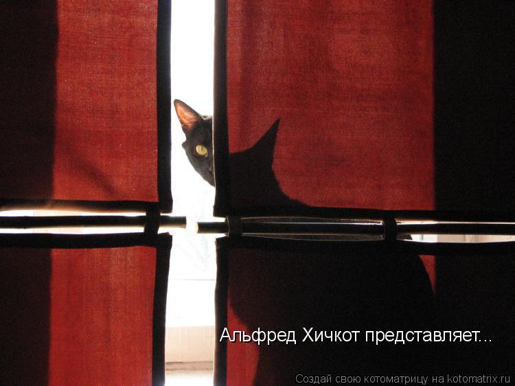Котоматрица: Альфред Хичкот представляет...