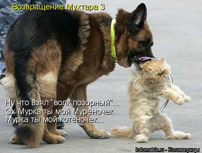 """Котоматрица: Возвращение Мухтара 3 Ну что взял """"волк позорный""""... Эх Мурка ты мой Мурёночек Мурка ты мой котёночек..."""