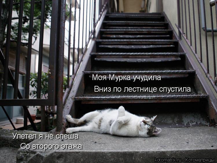 Котоматрица: Моя Мурка учудила Вниз по лестнице спустила Улетел я не спеша Со второго этажа