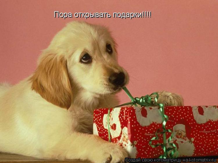 Котоматрица: Пора открывать подарки!!!!