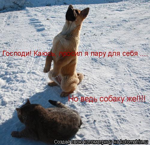 Котоматрица: Господи! Каюсь, просил я пару для себя .... Но ведь собаку же!!!!
