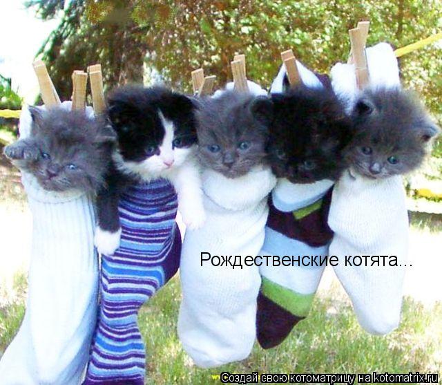 Котоматрица: Рождественские котята...
