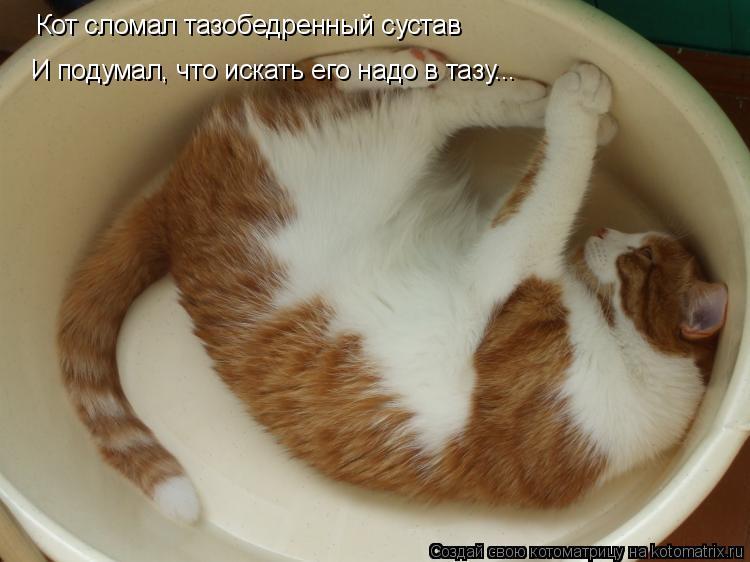 Котоматрица: Кот сломал тазобедренный сустав И подумал, что искать его надо в тазу...