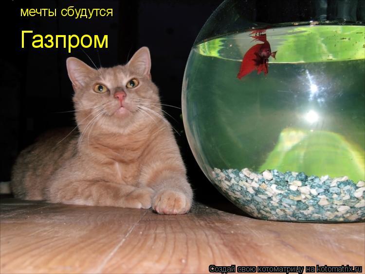 Котоматрица: мечты сбудутся  Газпром