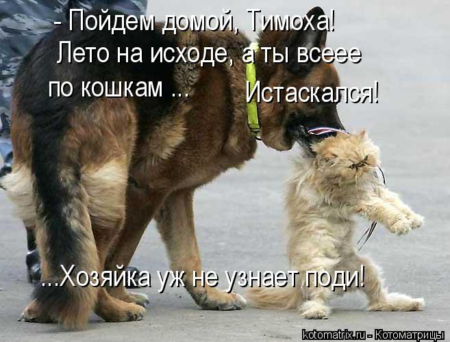 Котоматрица: - Пойдем домой, Тимоха! Лето на исходе, а ты всеее  по кошкам ... Истаскался!  ...Хозяйка уж не узнает поди!