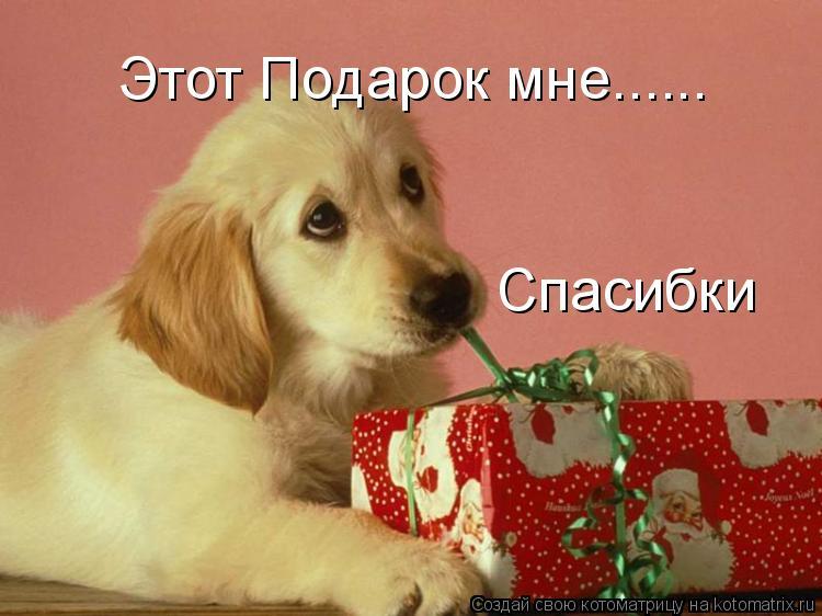 Котоматрица: Этот Подарок мне...... Спасибки