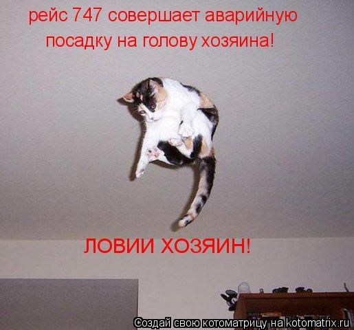 Котоматрица: рейс 747 совершает аварийную посадку на голову хозяина! ЛОВИИ ХОЗЯИН!