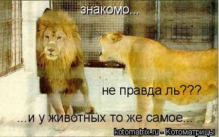 Котоматрица: знакомо... не правда ль??? ...и у животных то же самое...
