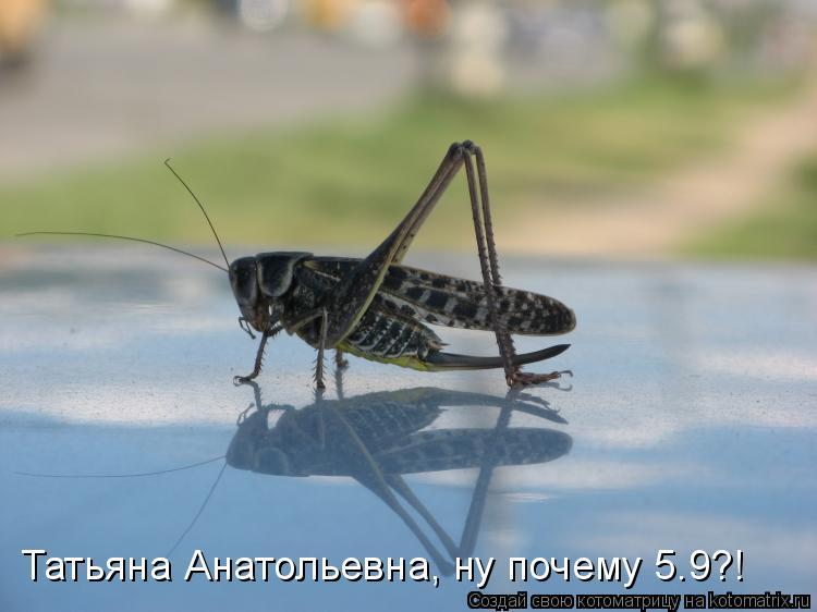 Котоматрица: Татьяна Анатольевна, ну почему 5.9?!