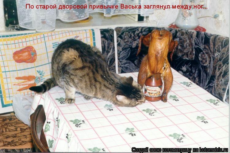 Котоматрица: По старой дворовой привычке Васька заглянул между ног...