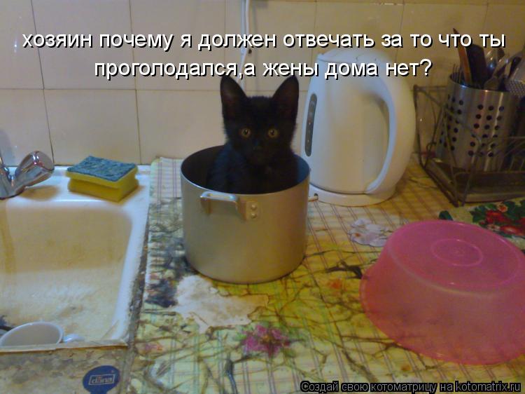 Котоматрица: хозяин почему я должен отвечать за то что ты проголодался,а жены дома нет? хозяин почему я должен отвечать за то что ты проголодался,а жены д