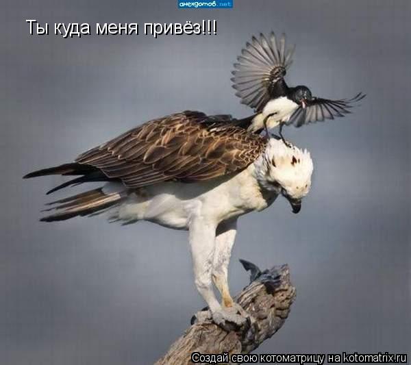 Котоматрица: Ты куда меня привёз!!!