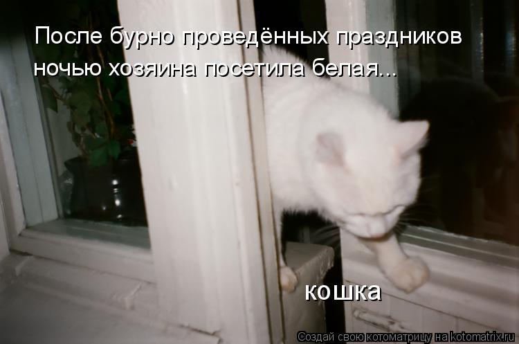 Котоматрица: После бурно проведённых праздников ночью хозяина посетила белая... кошка