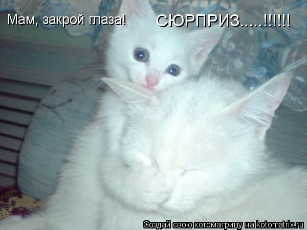 Котоматрица: Мам, закрой глаза!   СЮРПРИЗ.....!!!!!!