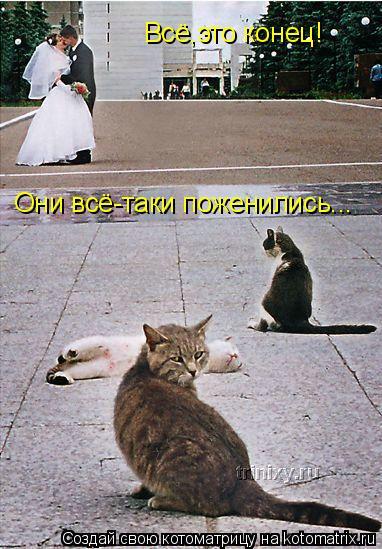 Котоматрица: Всё,это конец! Они всё-таки поженились...