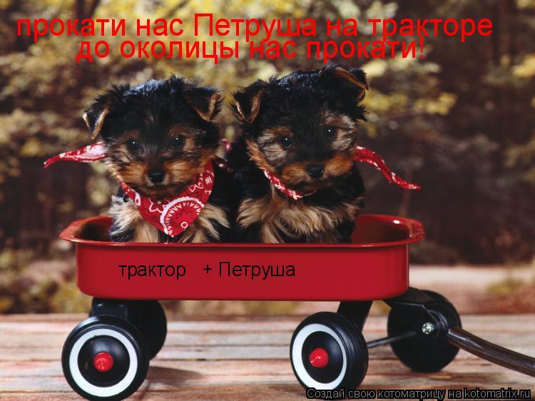 Котоматрица: прокати нас Петруша на тракторе до околицы нас прокати! трактор + Петруша