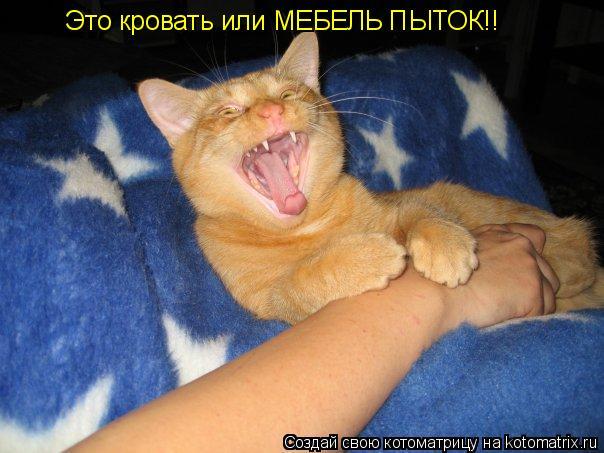 Котоматрица: Это кровать или МЕБЕЛЬ ПЫТОК!!