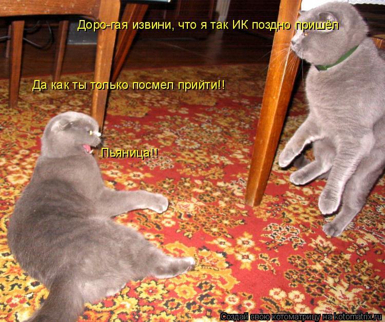 Котоматрица: Доро-гая извини, что я так ИК поздно пришёл Пьяница!! Да как ты только посмел прийти!!