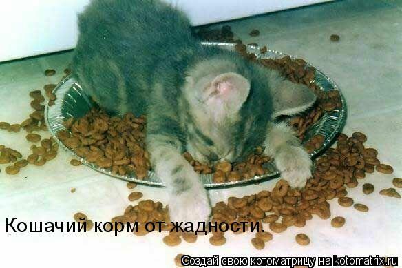 Котоматрица: Кошачий корм от жадности.