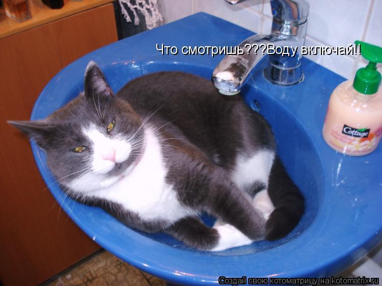 Котоматрица: Что смотришь???Воду включай!!