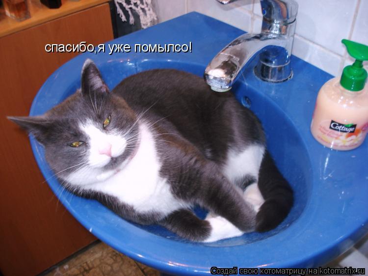 Котоматрица: спасибо,я уже помылсо!