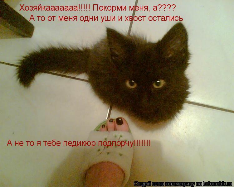 Котоматрица: Хозяйкааааааа!!!!! Покорми меня, а???? А то от меня одни уши и хвост остались А не то я тебе педикюр подпорчу!!!!!!!