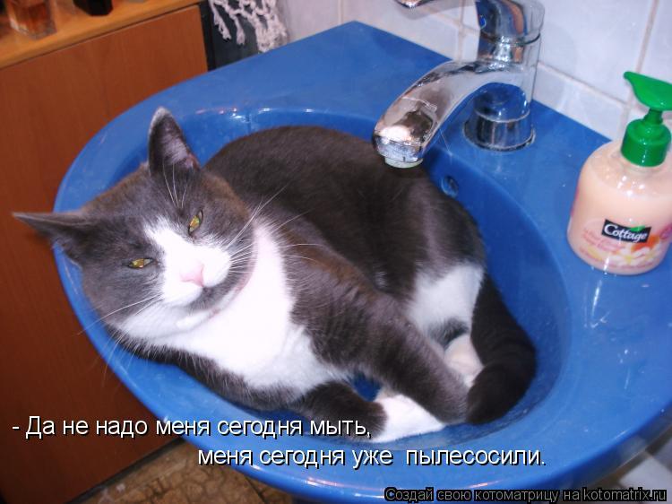 Котоматрица: - Да не надо меня сегодня мыть, меня сегодня уже  пылесосили.