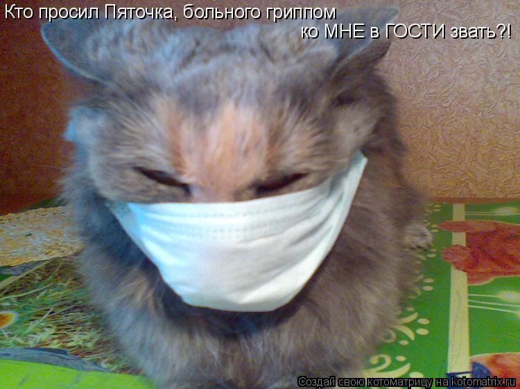 Котоматрица: Кто просил Пяточка, больного гриппом ко МНЕ в ГОСТИ звать?!