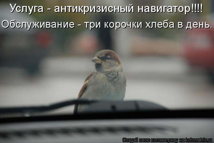 Котоматрица: Услуга - антикризисный навигатор!!!! Обслуживание - три корочки хлеба в день.