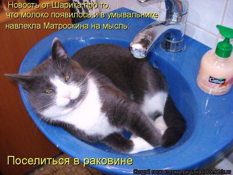 Котоматрица: Новость от Шарика про то,  что молоко появилось и в умывальнике навлекла Матроскина на мысль: Поселиться в раковине