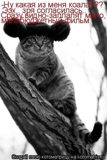 Котоматрица: -Ну какая из меня коала??? Ээх.. зря согласилась.. Сразу видно-заплалят мало, малобюджетный фильм..