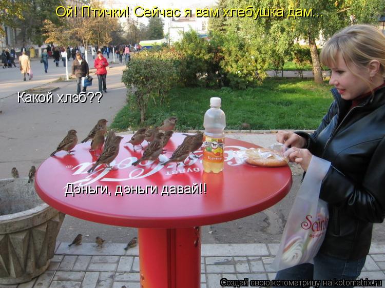 Котоматрица: Ой! Птички! Сейчас я вам хлебушка дам... Какой хлэб?? Дэньги, дэньги давай!!