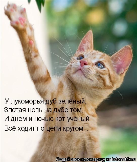 Котоматрица: У лукоморья дуб зелёный, У лукоморья дуб зелёный, И днём и ночью кот учёный Всё ходит по цепи кругом... Злотая цепь на дубе том,