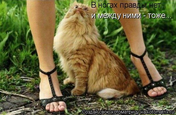 Котоматрица: В ногах правды нет... и между ними - тоже...