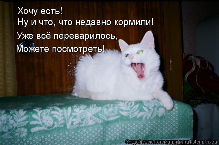 Котоматрица: Хочу есть! Ну и что, что недавно кормили! Уже всё переварилось,  Можете посмотреть!