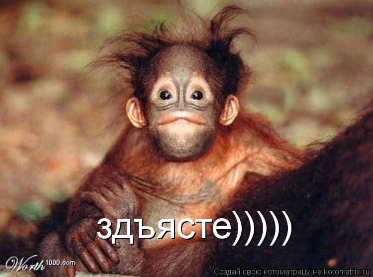 Котоматрица: здъясте)))))