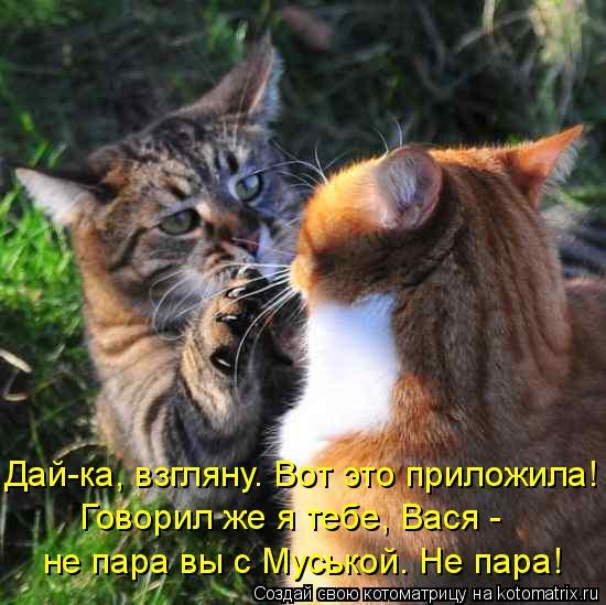 Котоматрица: Дай-ка, взгляну. Вот это приложила! Говорил же я тебе, Вася -  не пара вы с Муськой. Не пара!